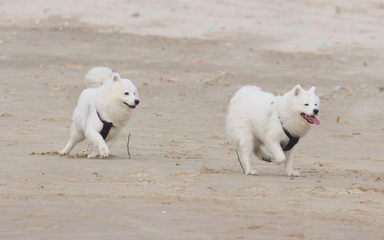 Photo free muzzle, dog, look