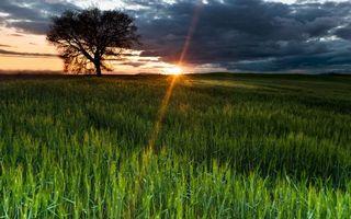 Заставки поле, зелень, ячмень, солнце, тучи, облака, пейзажи, природа