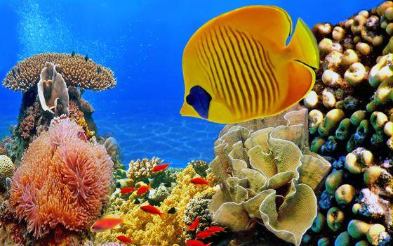 Заставки природа, рыбы, кораллы