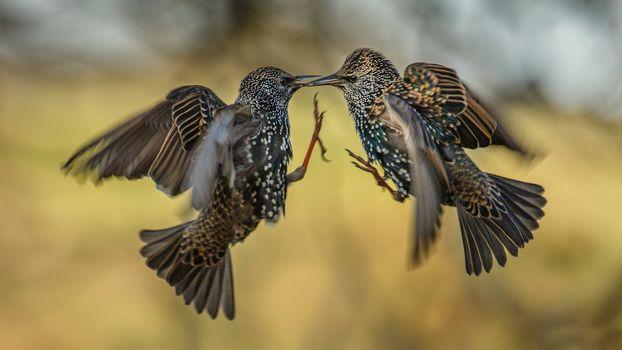 Photo free birds, fight, paws
