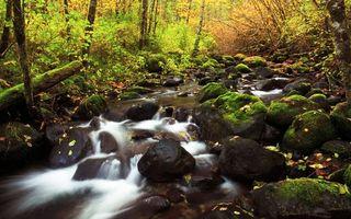 Бесплатные фото река,камни,лес,осень,листва,деревья,природа