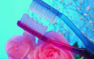 Обои щетки, зубные, цветки, розы, лепестки, букет, щетина, капли, брызги, роса, разное, цветы