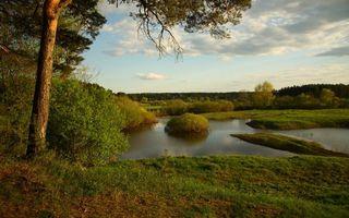 Фото бесплатно сосны, деревья, озеро