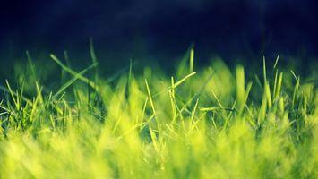 Фото бесплатно трава, зелень, земля