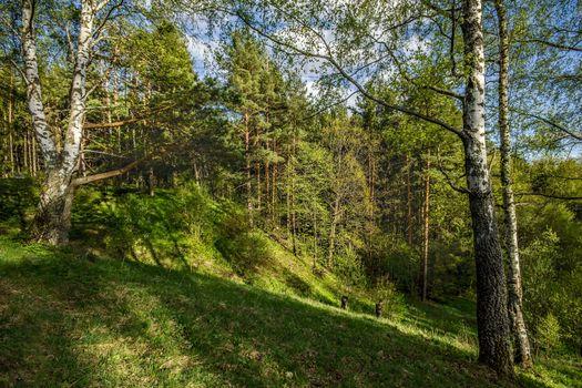Бесплатные фото весна,солнце,лес,склон,овраг,природа