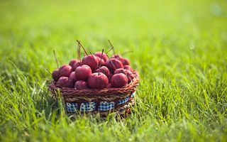 Фото бесплатно вишня, корзинка, ягоды, трава, газон, зелень, лето, тепло, еда