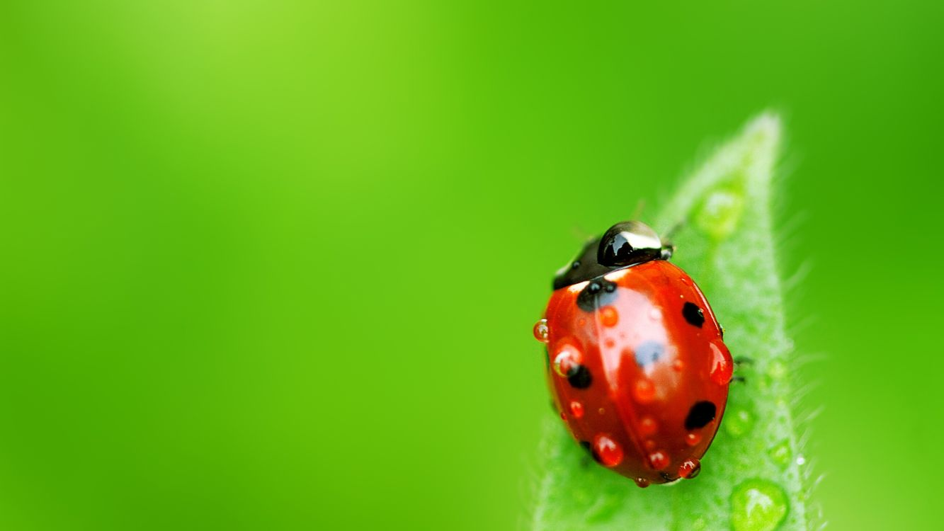 Фото бесплатно насекомое, божья коровка, лист, растение, трава, зелень, зеленый, фон, насекомые, насекомые
