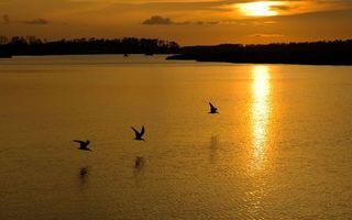 Бесплатные фото вечер,рекка,отражение,солнце,птицы,полет,деревья