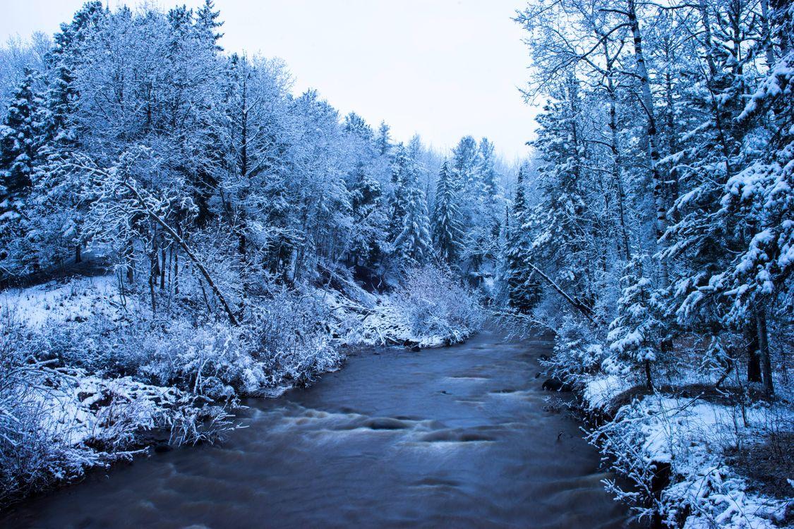 Фото бесплатно зима, река, деревья, пейзаж, пейзажи - скачать на рабочий стол