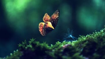 Photo free Forest, green grass, butterfly