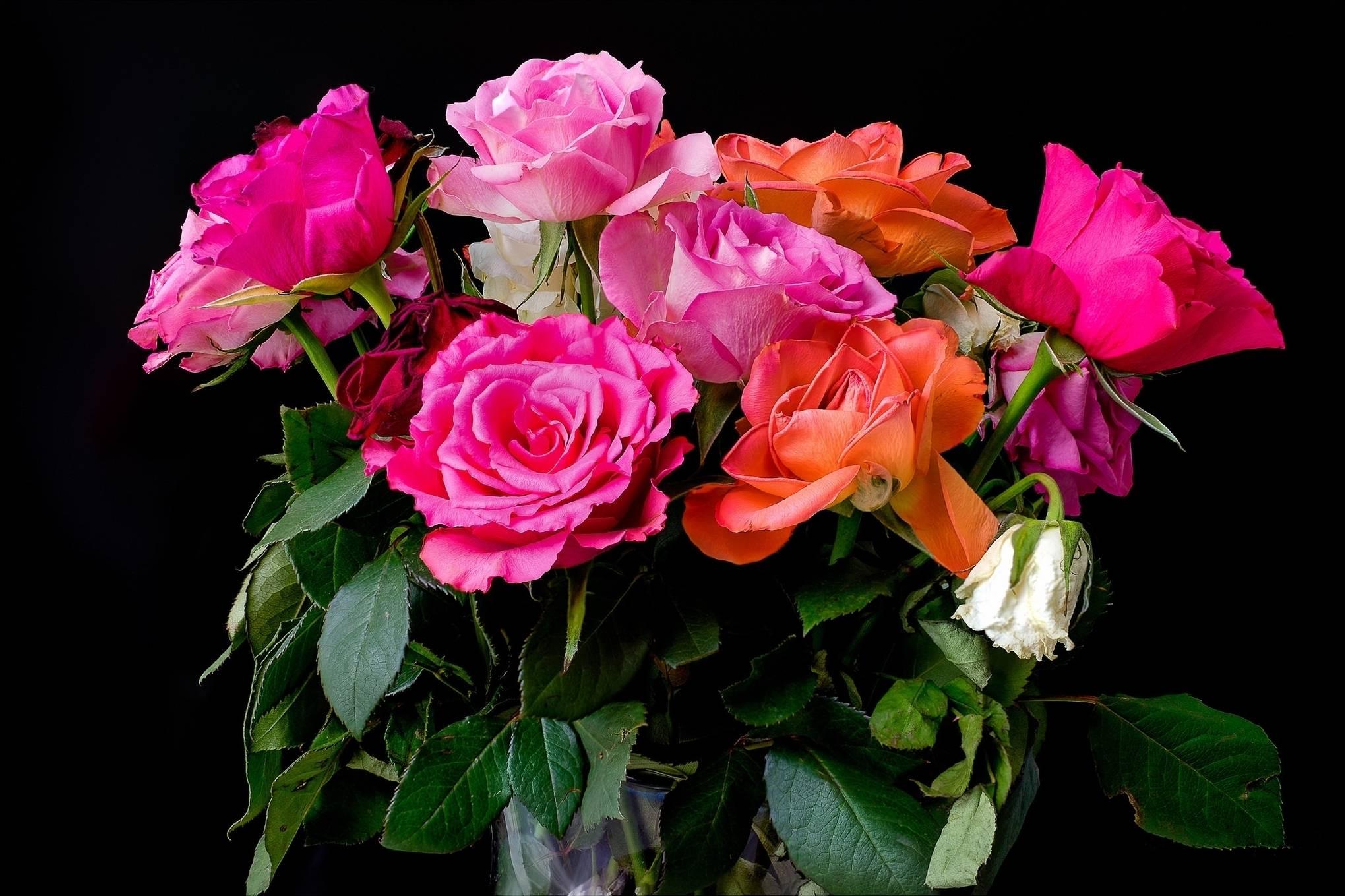 роза, розы, букет