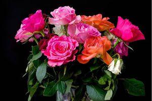 Бесплатные фото роза,розы,букет,цветы,флора,чёрный фон