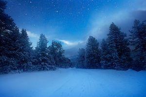 Бесплатные фото зима,лес,снег,деревья,пейзаж
