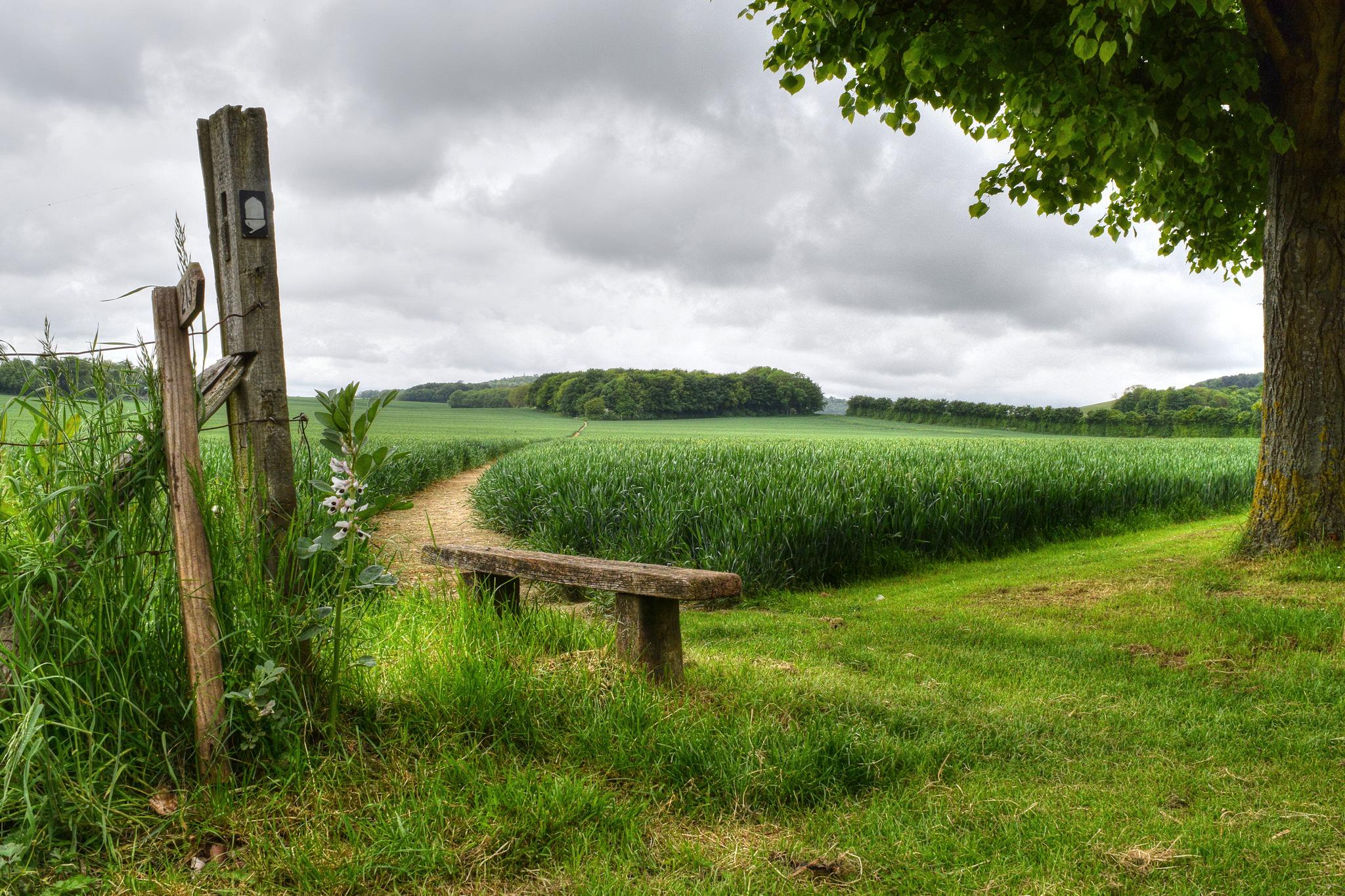Кент, Англия, поле