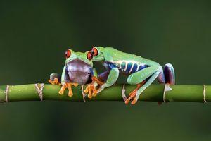 Фото бесплатно лягушка, Земноводные, пресмыкающиеся