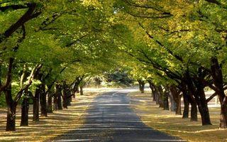 Фото бесплатно дорога, асфальт, листва