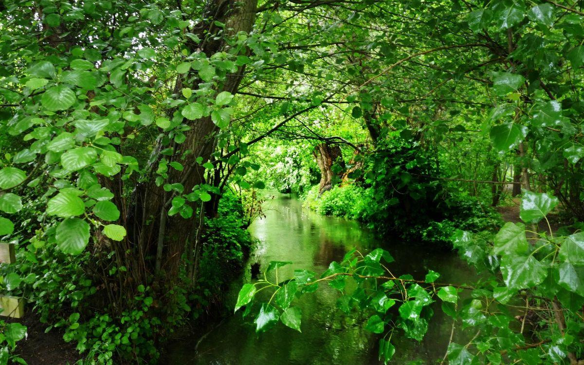 Free photo forest, trees, shrub - to desktop
