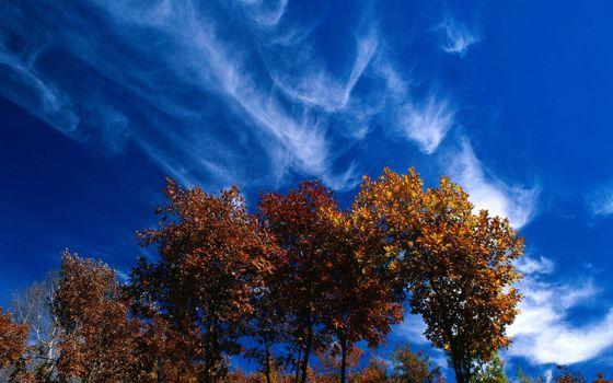 Бесплатные фото осень,деревья,кроны,листва,небо,облака