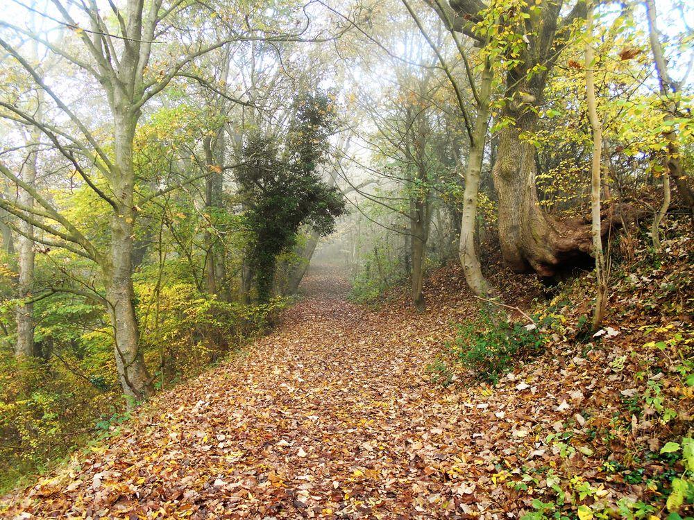 Заставки на тему лес, осень
