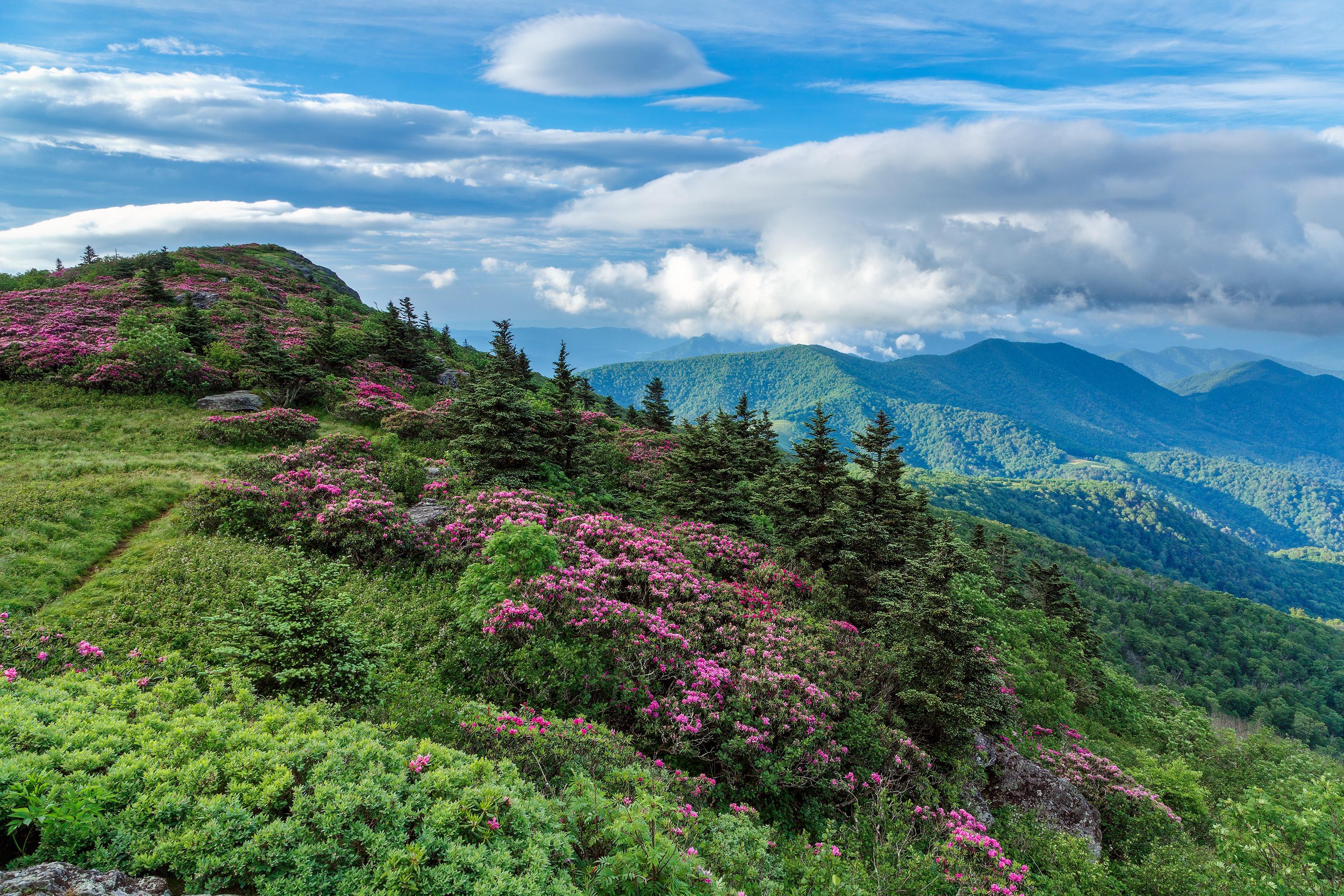 обои горы, камни, деревья, цветы картинки фото