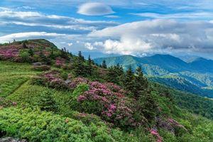 Бесплатные фото горы,камни,деревья,цветы,пейзаж