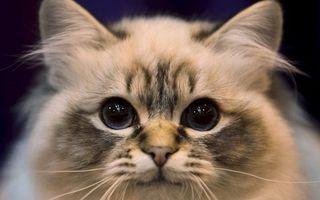Бесплатные фото кот,морда,глаза,уши,усы,шерсть