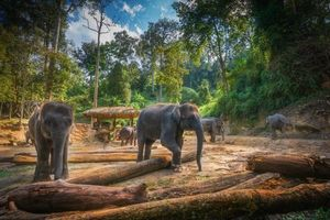 Заставки Лагерь Слонов Маеса Чианг Май,Таиланд,слоны