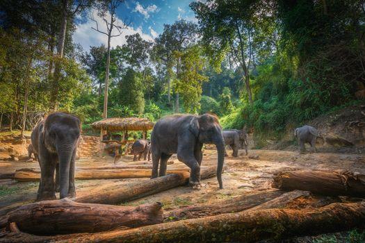 Photo free The maesa Elephant camp Chiang Mai, Thailand, elephants