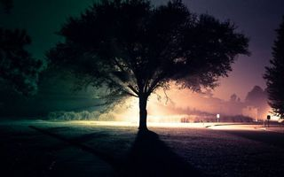 Фото бесплатно ночь, газон, деревья