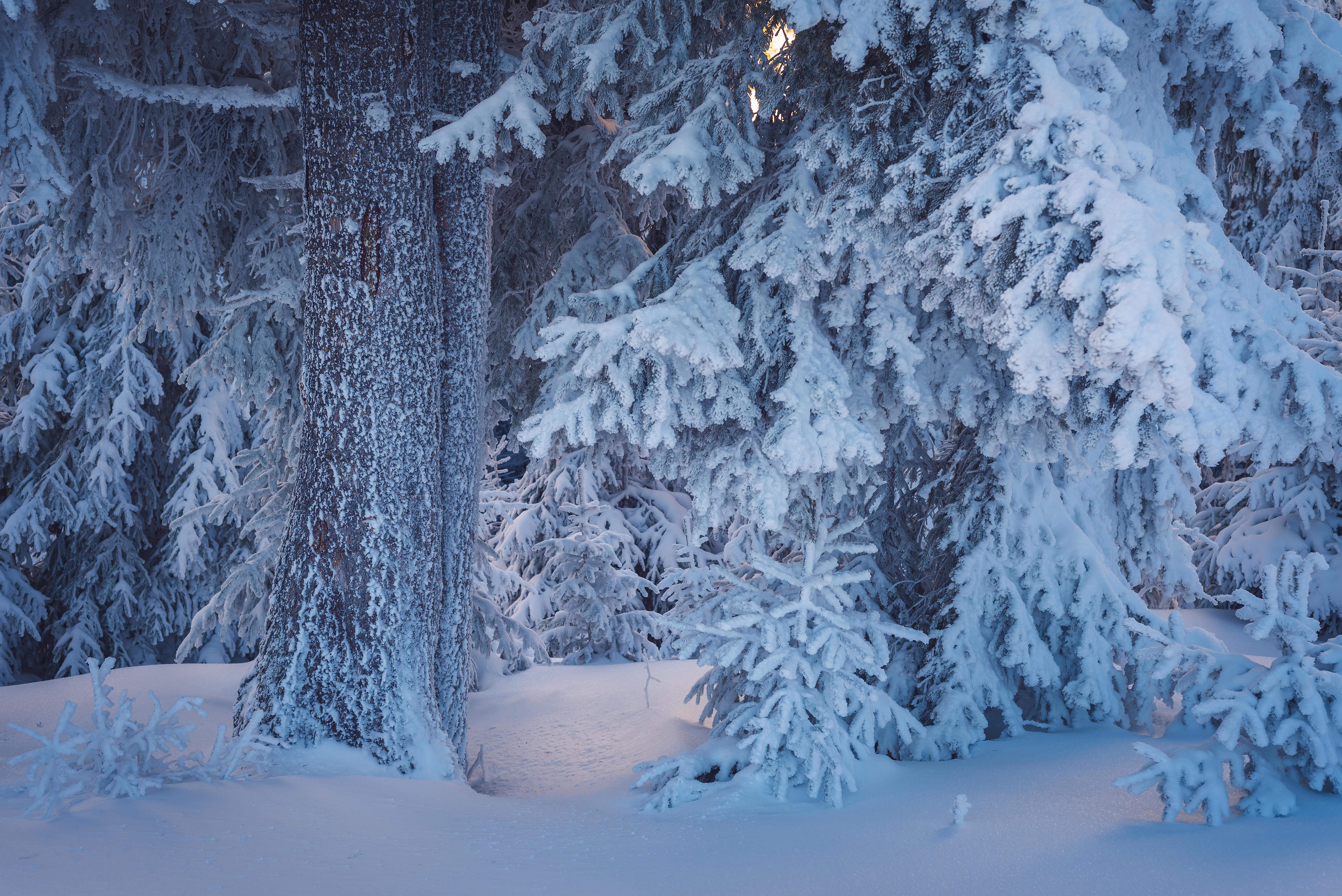 обои зима, лес, деревья, снег картинки фото