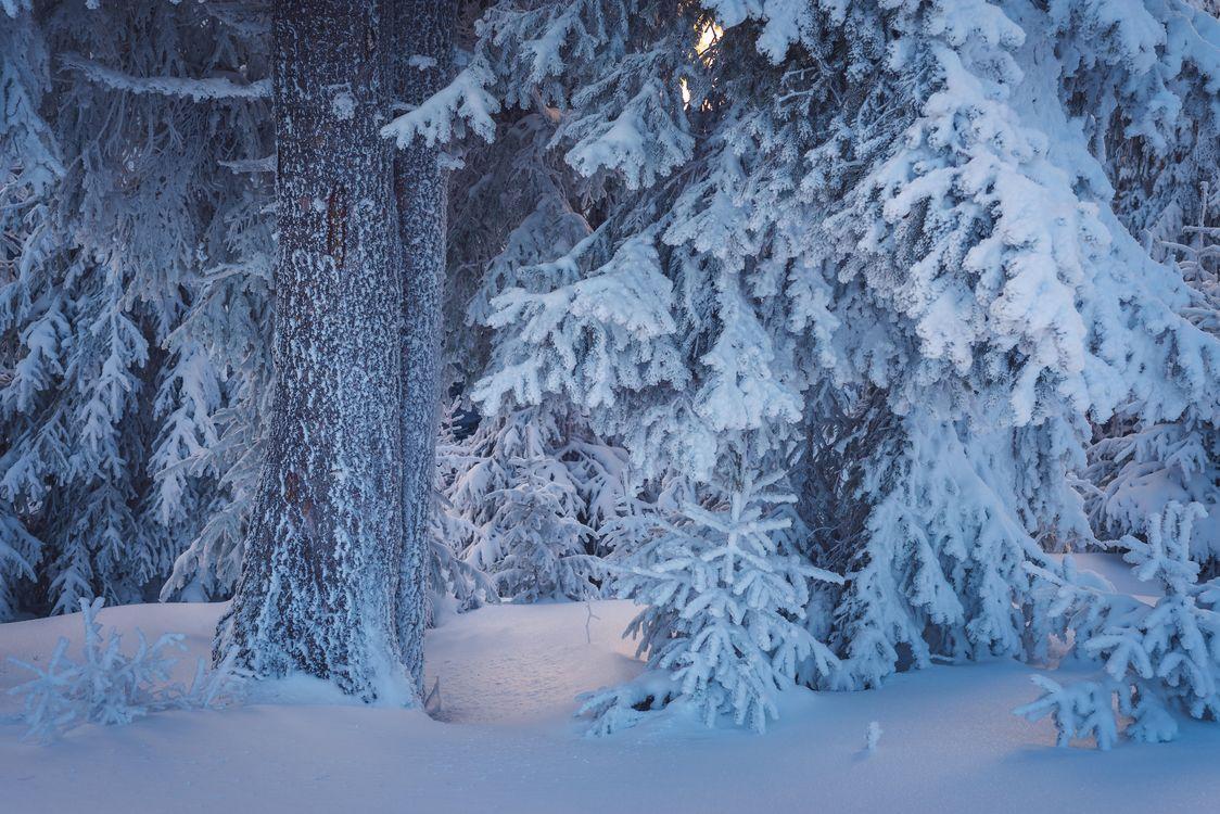 Фото бесплатно зима, лес, деревья, снег, сугробы, природа, природа