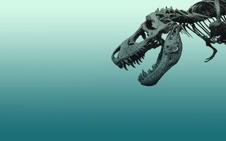 Бесплатные фото динозавр,скелет,череп,кости