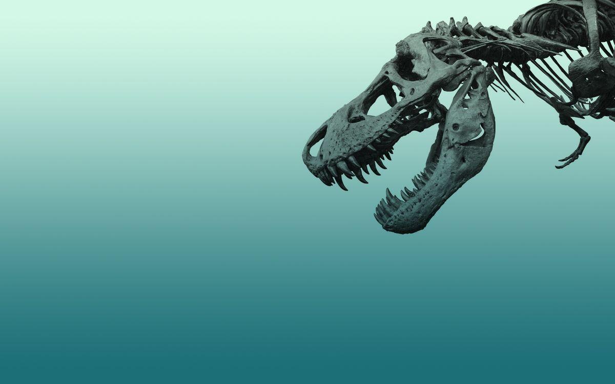 Фото бесплатно динозавр, скелет, череп, кости, разное