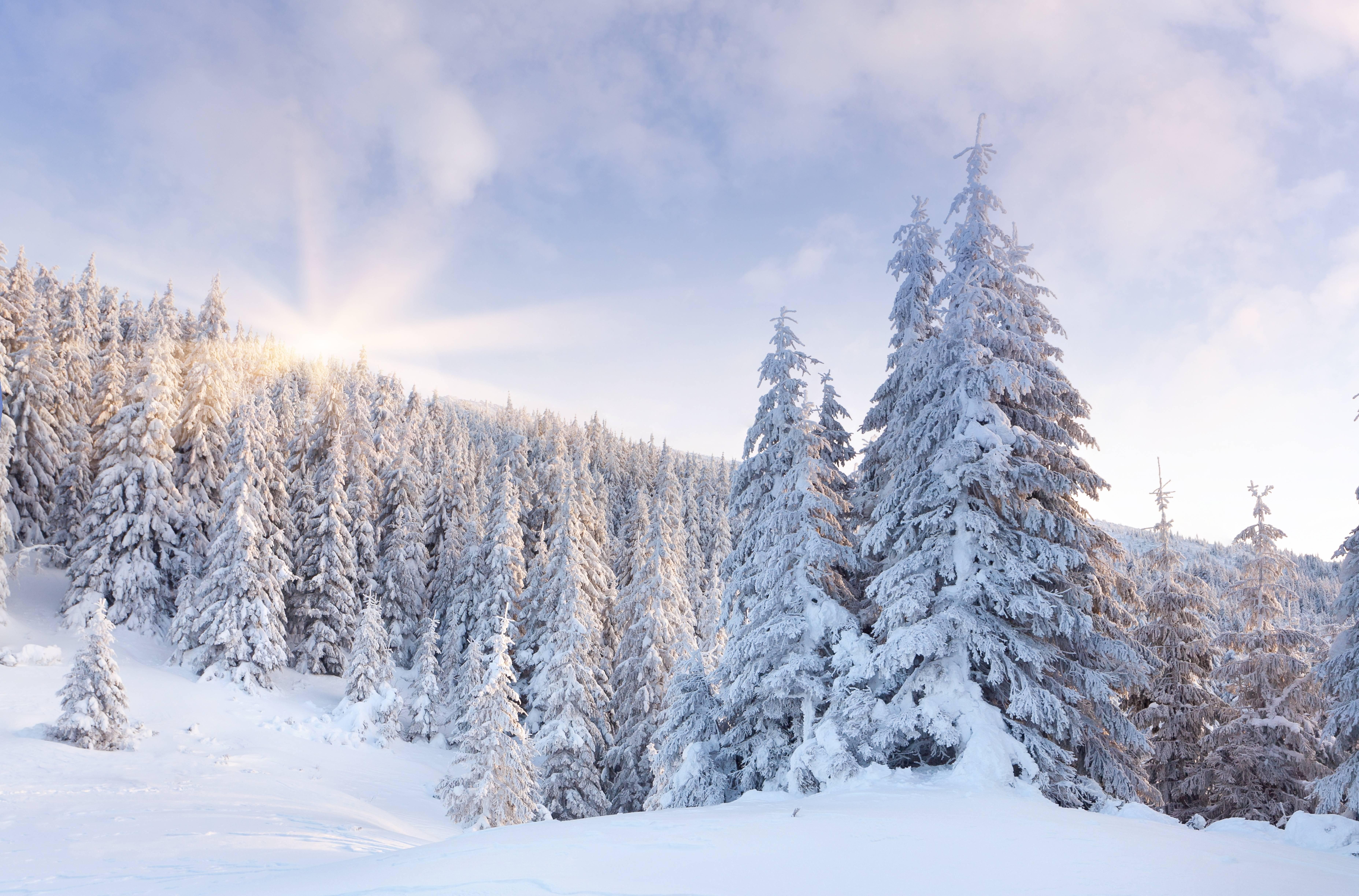 Картинка с деревьями в снегу, парадной открытки поздравлением