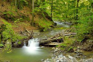 Бесплатные фото лес,речка,водопад,деревья,природа