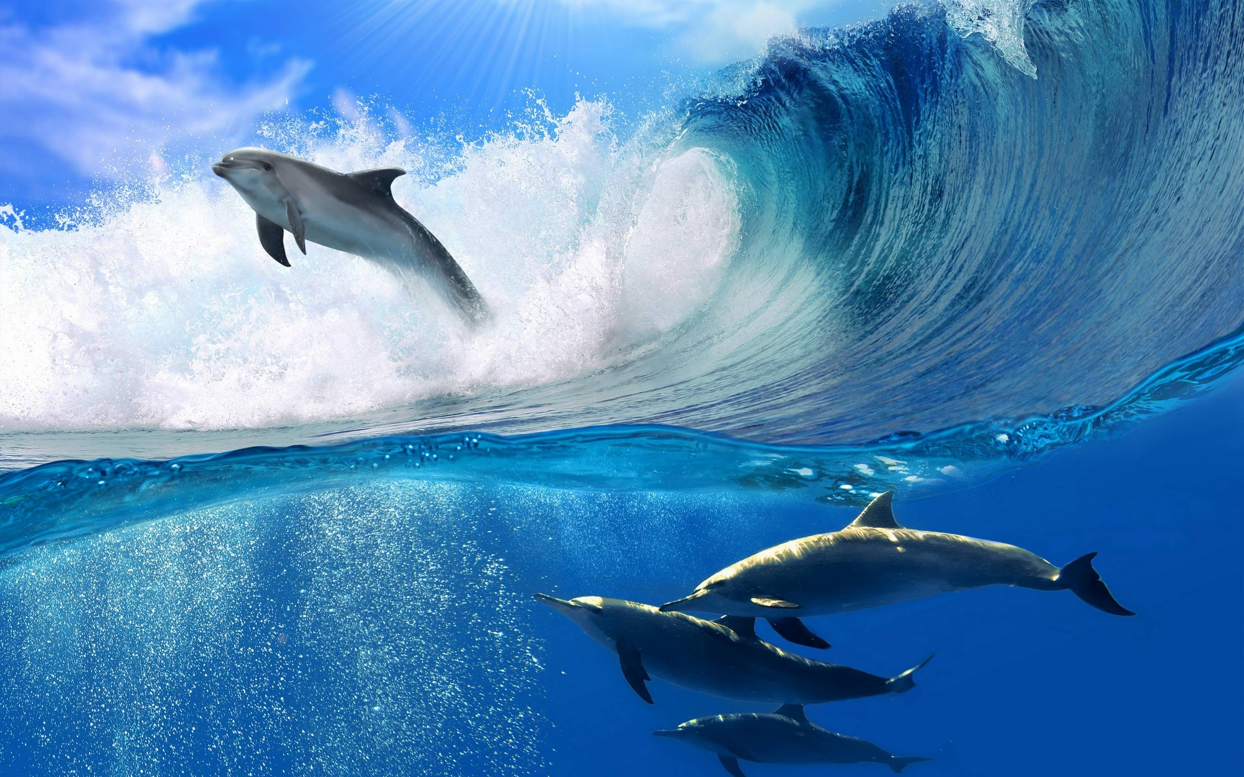 обои дельфины, плавники, хвосты, море картинки фото