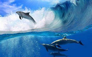 Бесплатные фото дельфины, плавники, хвосты, море, волна