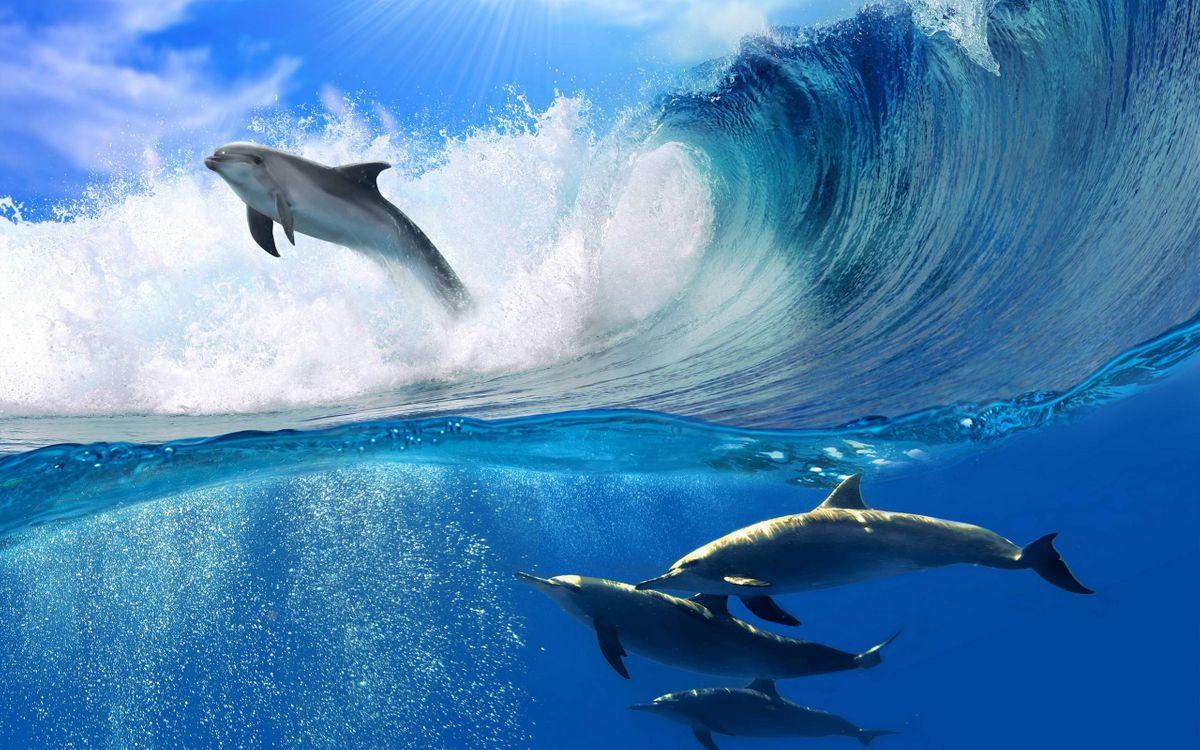 Фото бесплатно дельфины, плавники, хвосты - на рабочий стол