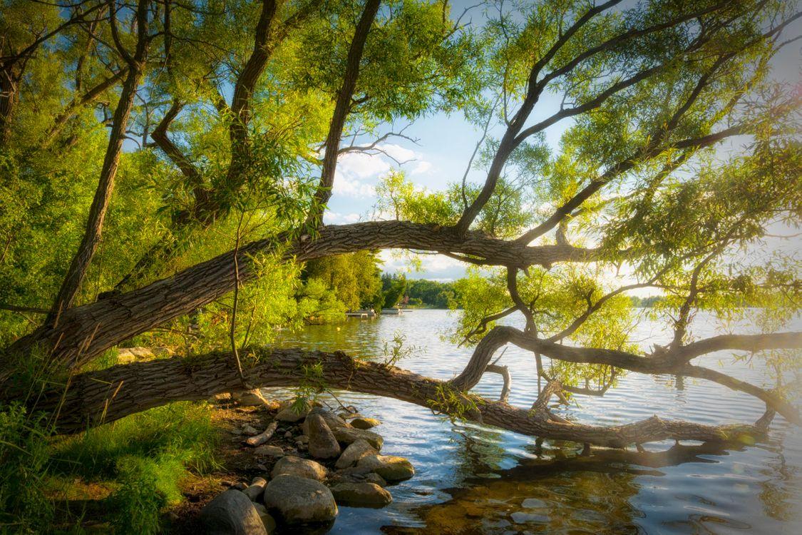 Фото бесплатно Lake Wilcox, Ричмонд Хилл, Онтарио, Канада, Озеро Уилкокс, пейзажи