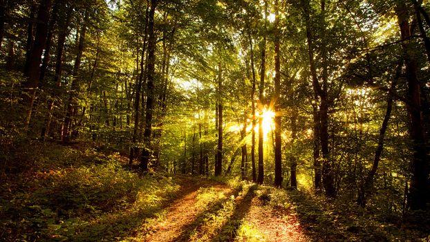 Фото бесплатно лес, восход солнца, лучи