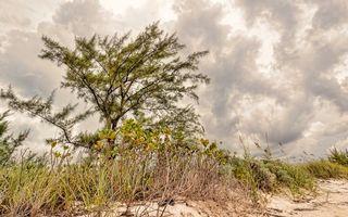 Бесплатные фото песок, трава, дерево, небо, облака