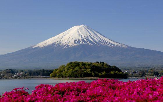 Фото бесплатно Цветы, речка, гора