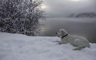 Заставки зима, собака, белая