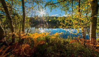 Фото бесплатно осень, водоём, деревья
