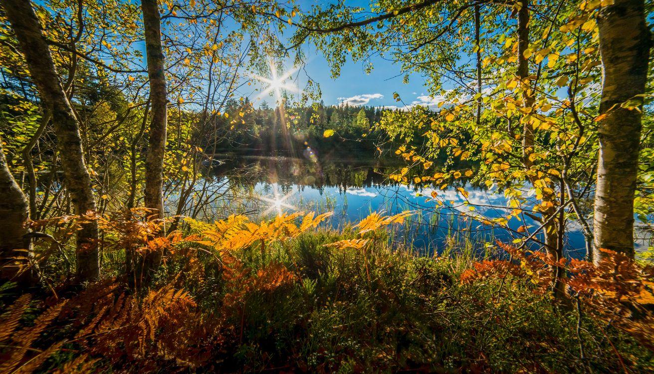 Фото бесплатно осень, водоём, деревья - на рабочий стол