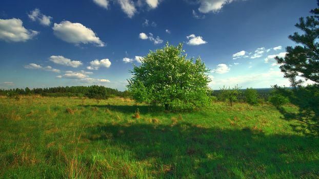 Бесплатные фото поле,дерево,пейзаж