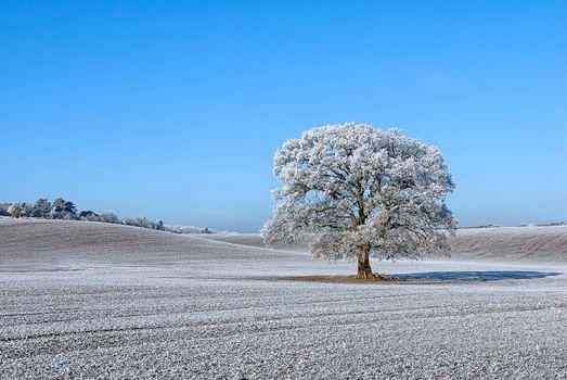 Бесплатные фото поле,холмы,дерево,природа