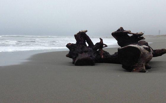 Фото бесплатно берег, песок, коряги