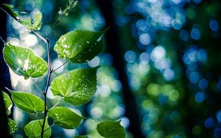 Бесплатные фото ветка,листики,лето,лучи солнца