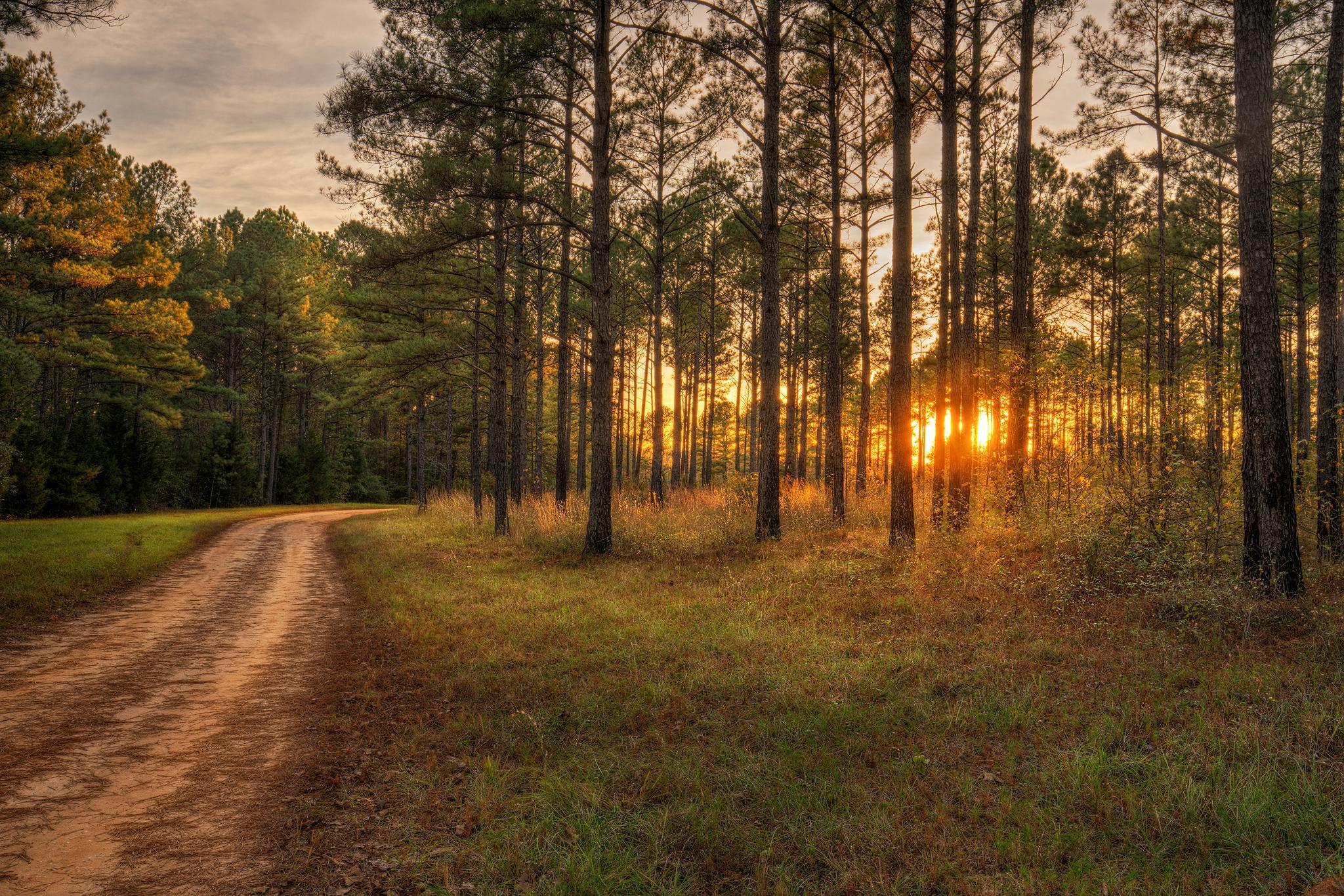 обои закат, дорога, лес, деревья картинки фото